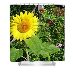 Garden Sunflower Shower Curtain by Aimee L Maher Photography and Art Visit ALMGallerydotcom