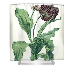 Garden Tulip Shower Curtain