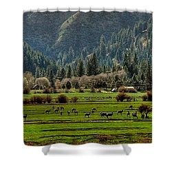 Garden Valley Elk Herd Shower Curtain by Sam Rosen