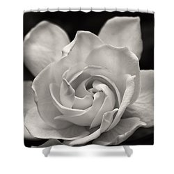 Gardenia Bloom In Sepia Shower Curtain