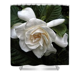 Gardenia Shower Curtain by Jessica Jenney