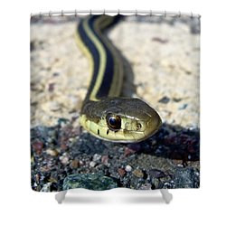 Garter Snake Shower Curtain