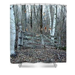 Gate And Birches Shower Curtain by Randi Shenkman