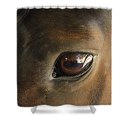 Gateway To A Horses Soul Shower Curtain by Shoal Hollingsworth