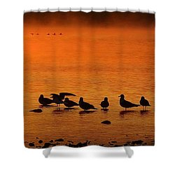 Gathering At Sunrise Shower Curtain