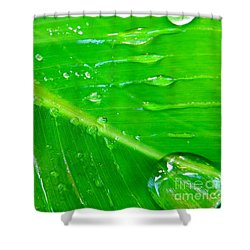 Gathering Rain Shower Curtain