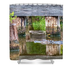 Gator At The Old Trestle Shower Curtain