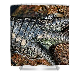 Gator Manicure Shower Curtain by Karol Livote