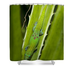 Gecko Shower Curtain by Mike Herdering