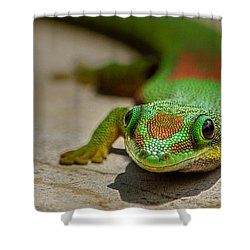 Gecko Portrait Shower Curtain