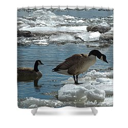 Shower Curtain featuring the photograph Geese And Cold Feet by Kristen Fox