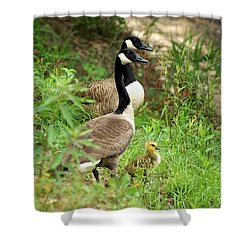 Geese And Gosling Shower Curtain