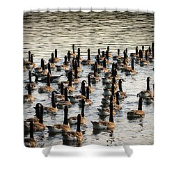 Geese In Sunset Light Shower Curtain by Menachem Ganon