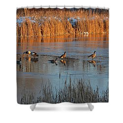 Geese In Wetlands Shower Curtain