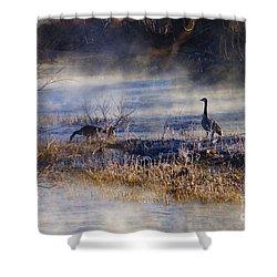 Geese Taking A Break Shower Curtain