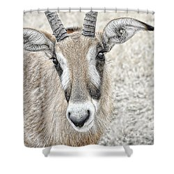 Shower Curtain featuring the photograph Young Oryx by Dyle   Warren