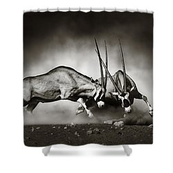 Gemsbok Fight Shower Curtain