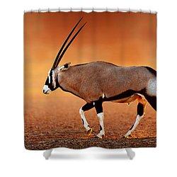 Gemsbok On Desert Plains At Sunset Shower Curtain by Johan Swanepoel