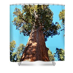 General Sherman Tree, Sequoia National Park, California Shower Curtain