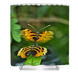 Shower Curtain featuring the photograph Gentle Butterfly Courtship 03 by Thomas Woolworth