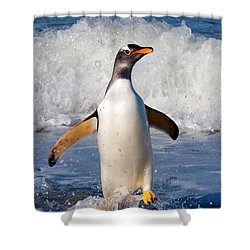 Gentoo Ashore Shower Curtain
