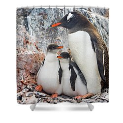 Gentoo Penguin Family Booth Isl Shower Curtain by Yva Momatiuk and John Eastcott