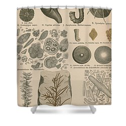 Geology And Paleontology 1886 Shower Curtain by Science Source