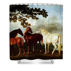 Shower Curtain featuring the painting Horses by George Stubbs