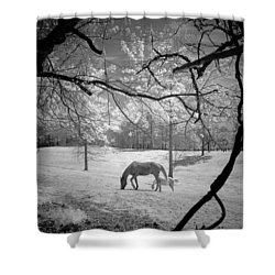 Georgia Horses Shower Curtain
