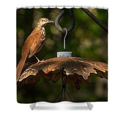 Shower Curtain featuring the photograph Georgia State Bird - Brown Thrasher by Robert L Jackson