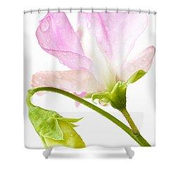 Geranium Pink Shower Curtain by Anne Gilbert