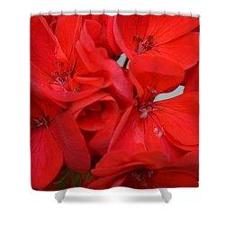 Geranium Red Shower Curtain by Maria Urso