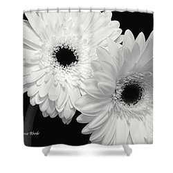 Gerbera Daisy Sisters Shower Curtain