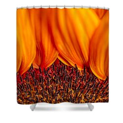 Shower Curtain featuring the photograph Gerbera On Fire by Adam Romanowicz