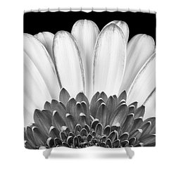 Gerbera Rising Shower Curtain
