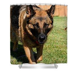 German Shepherd Shower Curtain by Kay Novy