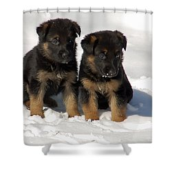 Shower Curtain featuring the photograph German Shepherd Pups by Aimee L Maher Photography and Art Visit ALMGallerydotcom