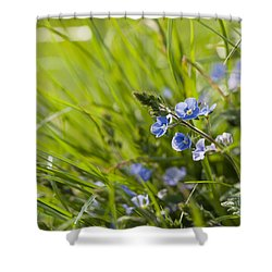 Germander Speedwell Shower Curtain by Anne Gilbert