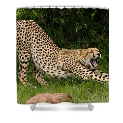 Getting Ready Shower Curtain by Menachem Ganon