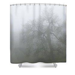 Ghostly Oak In Fog - Central California Shower Curtain