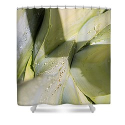 Giant Agave Abstract 3 Shower Curtain
