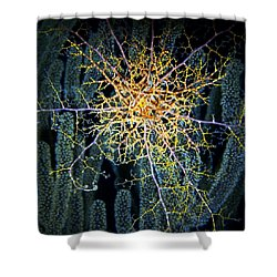 Giant Basket Star At Night Shower Curtain