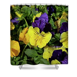 Giant Garden Pansies Shower Curtain by Ed  Riche