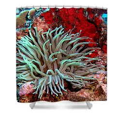 Giant Green Sea Anemone Against Red Coral Shower Curtain