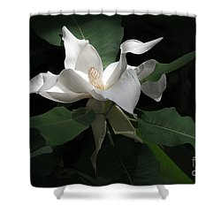 Giant Magnolia Shower Curtain