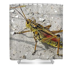 Shower Curtain featuring the photograph Giant Orange Grasshopper by Ron Davidson