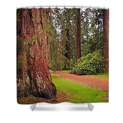 Giant Sequoia Or Redwood. Benmore Botanical Garden. Scotland Shower Curtain by Jenny Rainbow