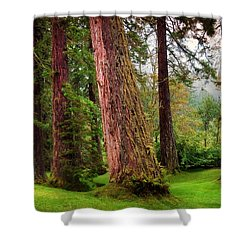 Giant Sequoias. Benmore Botanical Garden. Scotland Shower Curtain by Jenny Rainbow