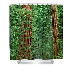 Giant Sequoias Sequoiadendron Gigantium Yosemite Np Ca Shower Curtain by Dave Welling