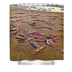 Shower Curtain featuring the photograph Giant Squid Capitola Beach by Antonia Citrino